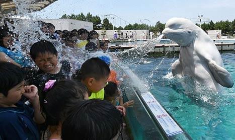 太热天,海洋馆的白海豚让小朋友们凉快凉快