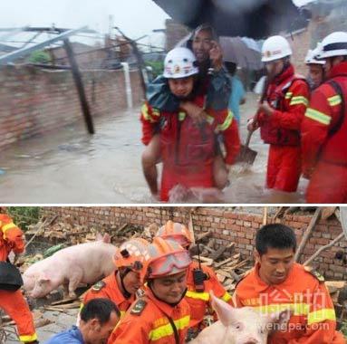 先救猪再救人:村民被洪水围困 告诉消防员先救猪后救人