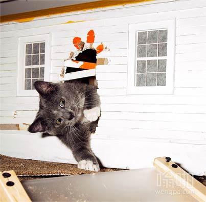 猫咪闯入玩具屋
