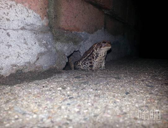 每天晚上这个宏伟的野兽从它的洞穴出现 守护我的公寓