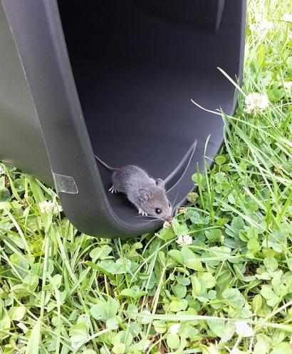 老鼠也可以文艺小清新