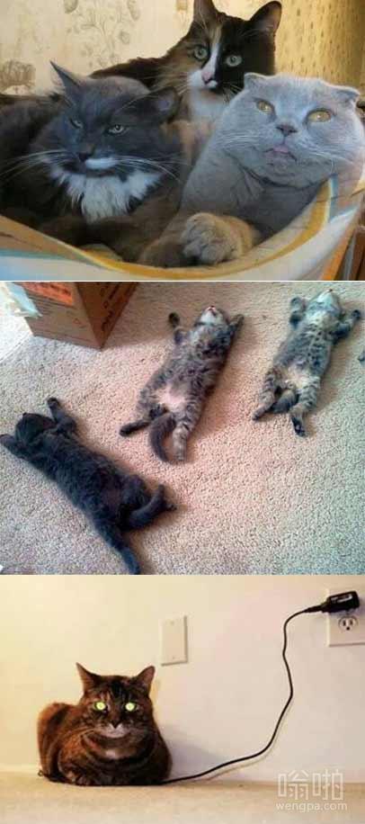 一组萌猫图 天气热也得充电