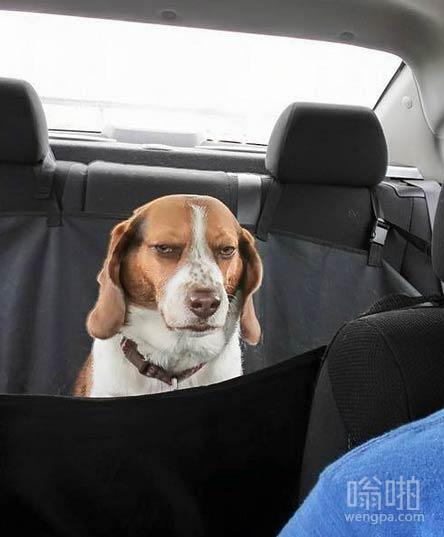 这狗被主人放在巨大袋子里很不满意