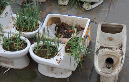 天台马桶种菜