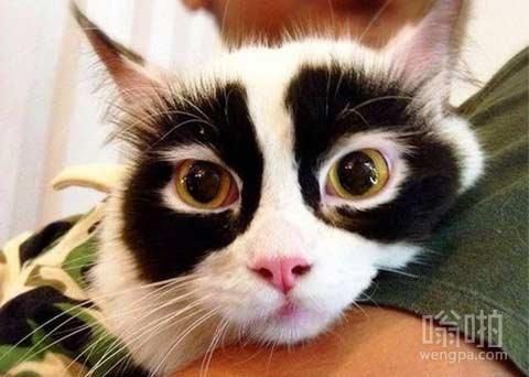 猫有独特图案的皮草