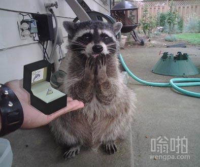 当你拿着钻戒向女友求婚时