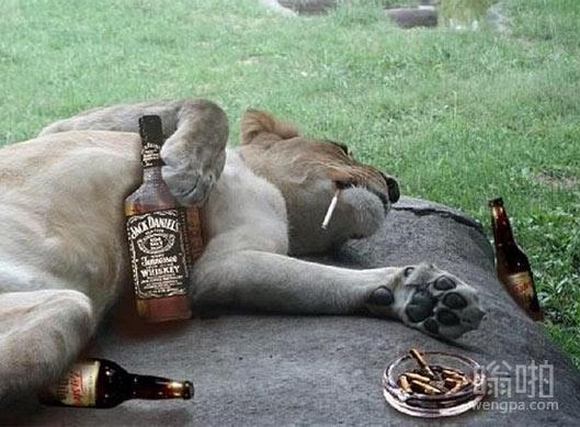 颓废的狮子