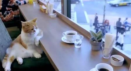 又是忙碌一天的开始 喝杯咖啡压压惊
