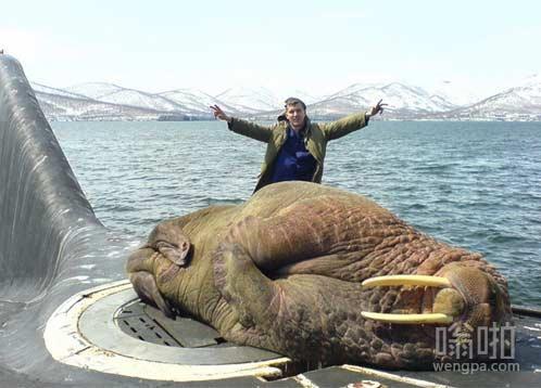 在俄罗斯潜艇海象睡着了