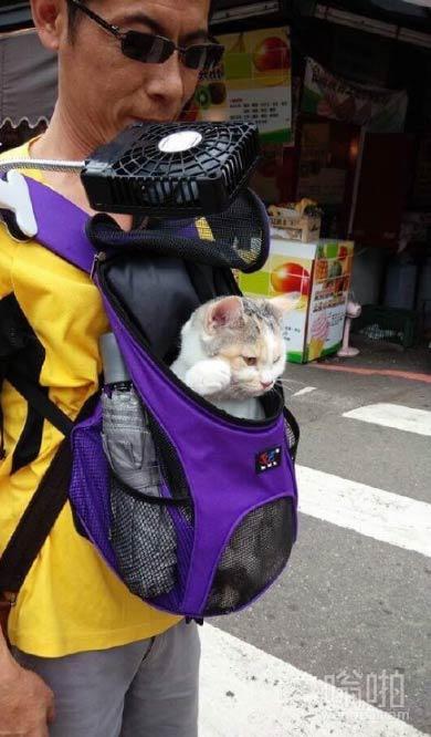 """网友的外公自从养猫之後,就变成了猫奴。有次外公带喵星人出去,外公怕喵星人太热,於是特地买了个风扇给喵星人。。""""都给我闪开"""""""