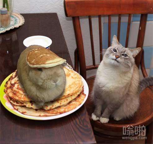"""""""服务员……有我的一只野兔煎饼!"""""""