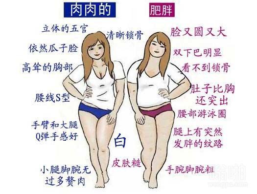 """一张图说明""""肉肉的""""和""""肥胖""""的本质区别"""