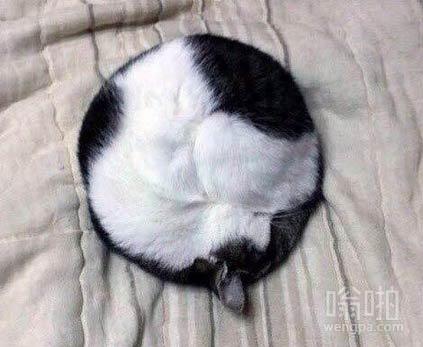 【猫搞笑图片】完美