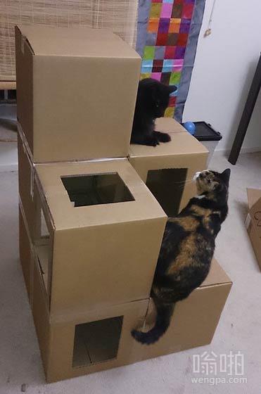 我做了一个猫的公寓