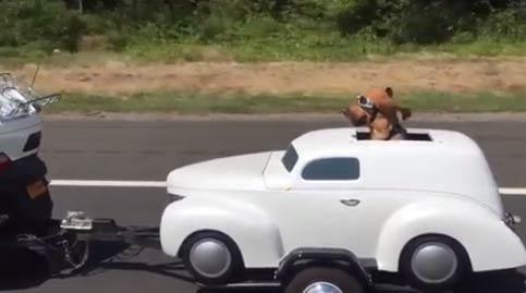 小狗有自己的机车