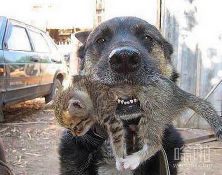 这狗救了一只小猫