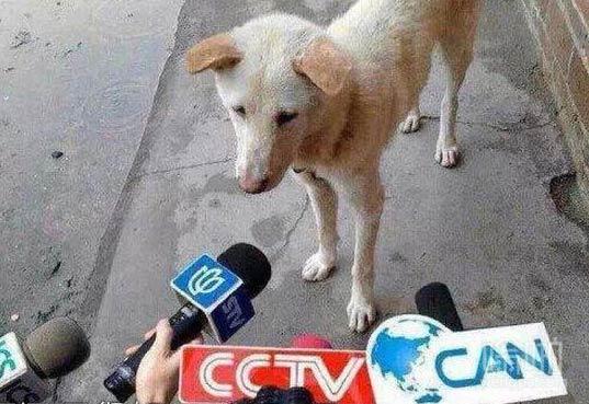 作为一只单身狗,你能谈谈此时此刻的心情吗