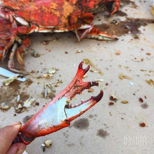 这蟹爪增长的另一个小爪