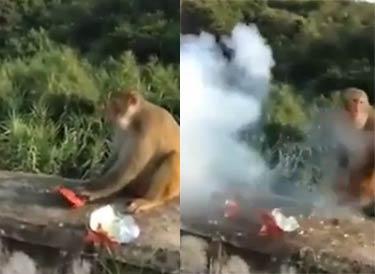 实拍猴子讨食遭扔炮仗被炸鲜血淋漓 男子放声大笑