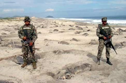 墨西哥海军陆战队员在沙滩警戒,以防止乌龟蛋被破坏