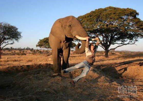在大象的牙上荡漾