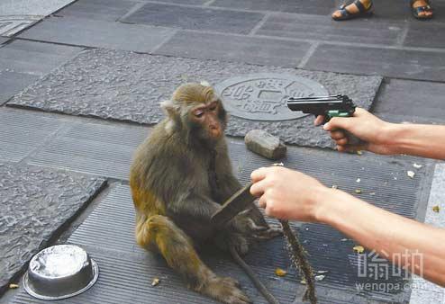 """猴子被逼卖艺赚钱 """"负能量""""遭围观群众抵制"""