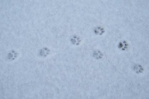 猫是这么走路的