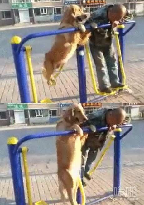 一条狗享受小区健身器材