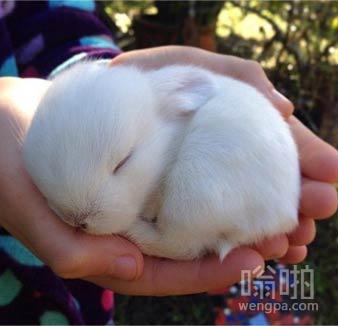 11天大的婴儿小兔子