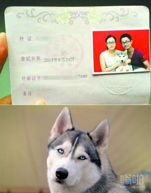 大学生抱狗登记结婚 狗也能上结婚照了?