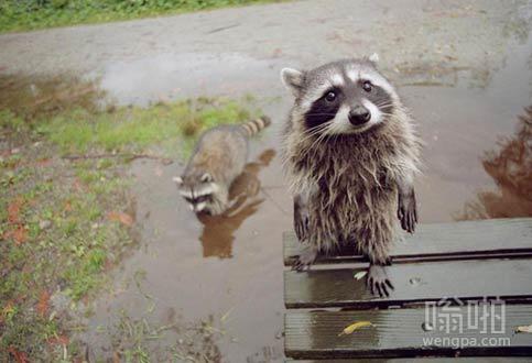 """""""我们能在您的水坑玩吗?"""""""