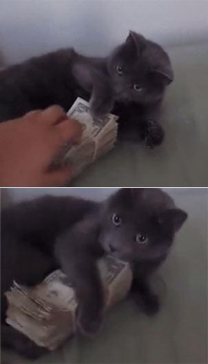 财迷猫:这是我的钱