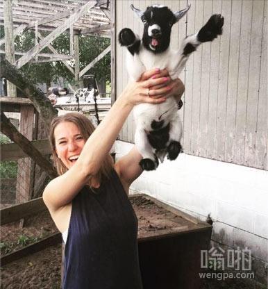 快乐的小羊
