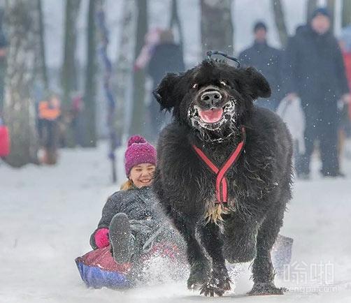 看这狗的脸