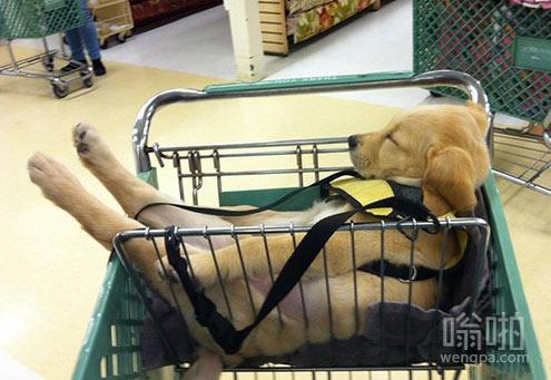 狗狗很享受购物时间