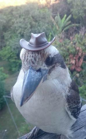 这鸟是个绅士