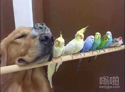 这是鲍勃。他的朋友包括8个小鸟和一只仓鼠