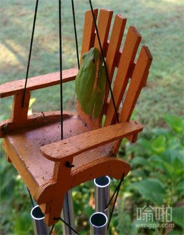 青蛙贴在椅子靠背上