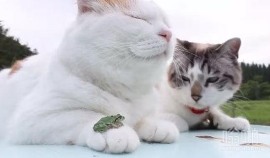 我的宠物青蛙