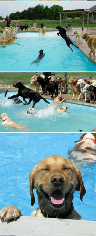 狗泳池派对!