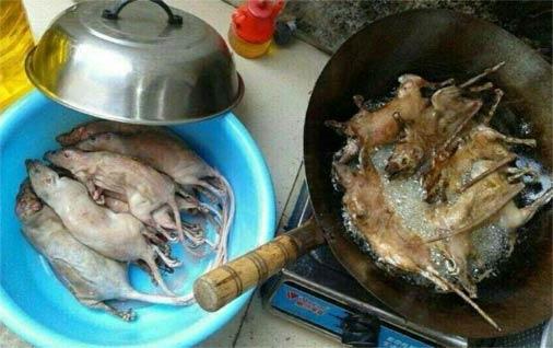 重口味广东美食 油炸老鼠