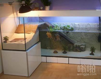 这些乌龟有一个比我更好的房间