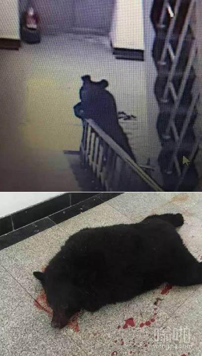 黑熊小弟第一天来学校报道后