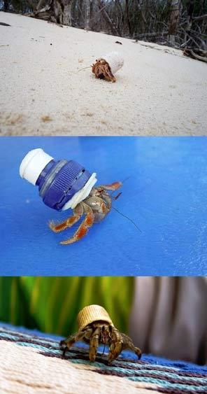 人类如何帮助海洋生物