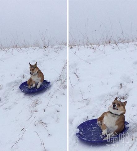 胆小的二汪玩滑雪