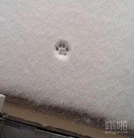 下雪天喵星人:还是在家呆着吧