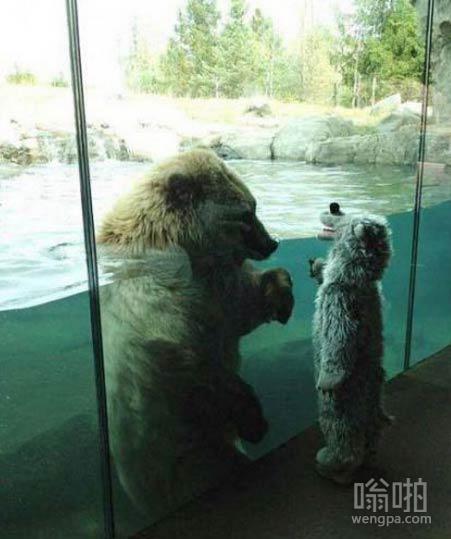 北极熊看到穿熊服装的孩子