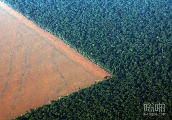 在亚马逊雨林的森林砍伐,巴西
