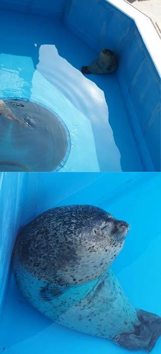 原来海豹睡觉是这样的