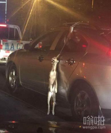 """车主将狗挂在车窗外  只因""""怕狗弄脏车"""""""